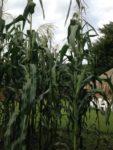Cultivating Fields of Prosperity